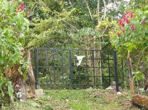 Santa Fe im Bergland von Panama: noch ein Geheimtipp