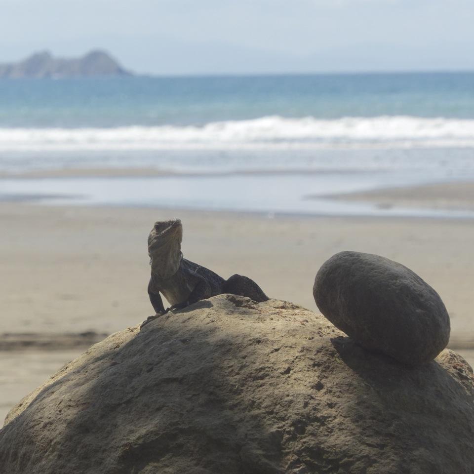 Costa Rica mit Kindern individuell - Hotels Strände Pazifik Ballena
