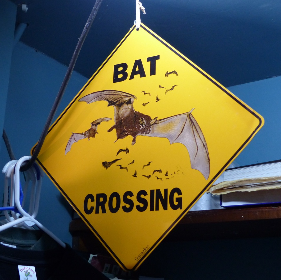 Monteverde-Bat-Fledermaus-Museum-Familientipp