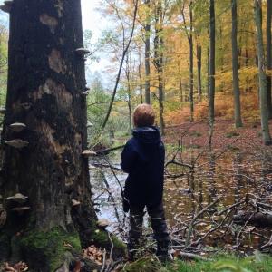 Wandern mit Kindern-Brandenburg-Grumsin-Urwald-Sumpf-Baumpilze