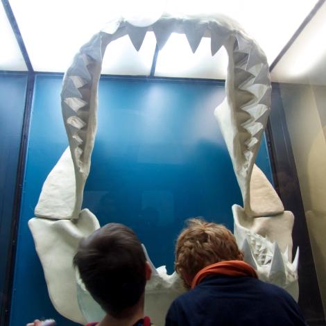 Berlin Naturkundemuseum mit Kindern - weisser Hai