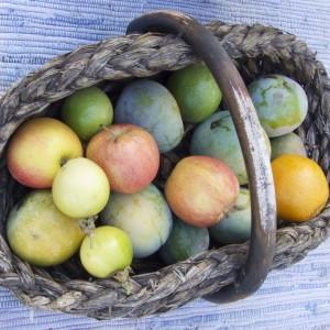 Kanarisches Essen - Früchte