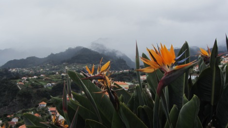 Paradiesblumen Madeira mit Kindern
