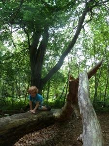 Darßwald-Naturspielplatz Ostsee Wandern mit Kindern