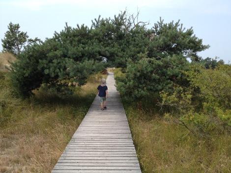 Ostsee mit Kind - Wandern am Darßer Ort