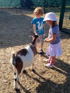 Ostsee mit Kindern-Bauernhof-Gut Born-Streichelzoo